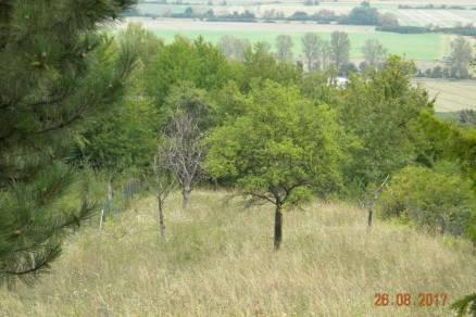 Eladó telek Sopron