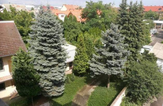 Szegedi eladó lakás, 1+2 szobás, a Kálvária téren