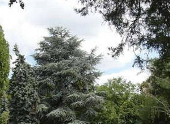 Bárdudvarnoki telek eladó, 5400 négyzetméteres
