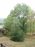 Telek eladó Csobánkán, 1703 négyzetméteres